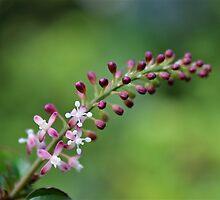 Tiny Spray of Flowers by SunshineKaren