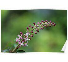 Tiny Spray of Flowers Poster