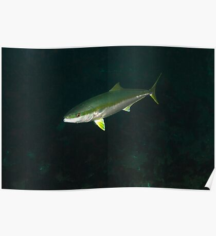 Adelaide Kingfish 15-4-12 Poster