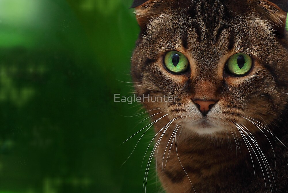 Color Me Green by EagleHunter