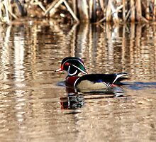 Drake Wood Duck by Larry Trupp