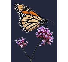 Monarch tee2/prints/products Photographic Print