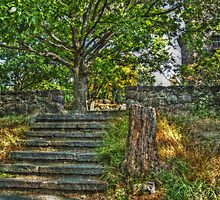The Path to Lambert Castle Lookout Tower by Jane Neill-Hancock