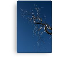 Silver and Blue - a Metal Tree Sculpture Plus Blue Sky and Sunshine Canvas Print