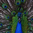 Peacock Face by MaureenS