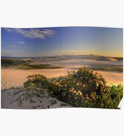 Dune Field Poster