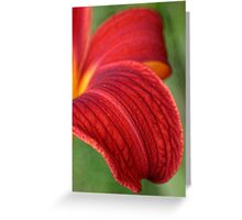 Lily Petals Greeting Card
