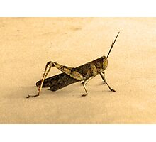 hopper Photographic Print