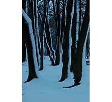 Mystery forest during a dark afternoon Photographic Print
