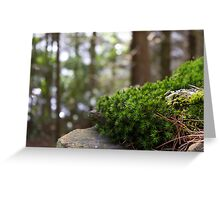 Moss fights back! Greeting Card