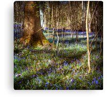 Forest Blues Canvas Print