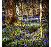 Forest Blues Photographic Print