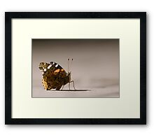 Red Admiral Strikes a Pose Framed Print