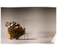 Red Admiral Strikes a Pose Poster