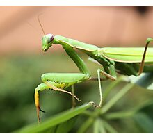 Green Mantis Photographic Print
