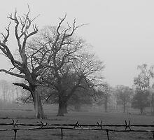 Lotherton Landscape by James Kowacz