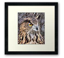 Eurasian Eagle Owl. Framed Print