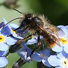 Bullseye! Little beastie on Forget-me-nots. by Rivendell7