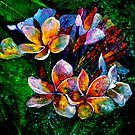 Frangipani....A Touch of Frost... by  Janis Zroback