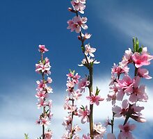 Spring sky by Maria1606