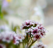 Springtime bokeh  by Andrea Rapisarda