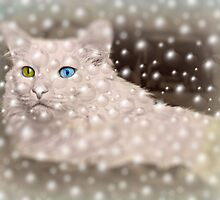 Bubble dreams by Scott Mitchell