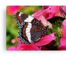 White Admiral Butterfly Art Canvas Print