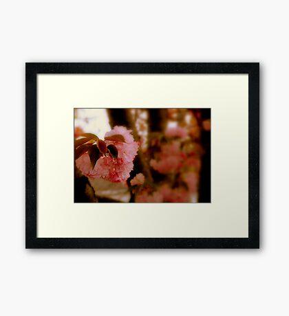 A single Bloom   ^ Framed Print