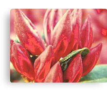 Textured Bloom   ^ Canvas Print
