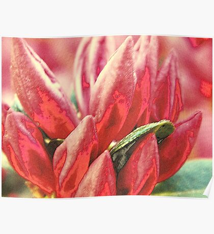 Textured Bloom   ^ Poster