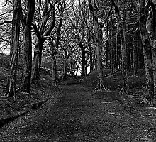 The Twisted Path by seanwareing