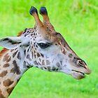 Giraffe by Mark Fendrick