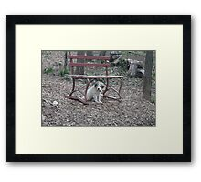 Dude, Just Hanging Here Framed Print