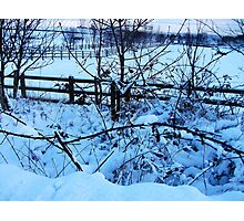 Snow Covered Brambles! Photographic Print