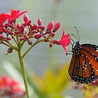 Butterfly 3 by Mark Fendrick