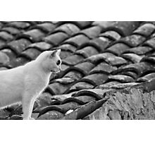 a cat on the tiles Photographic Print