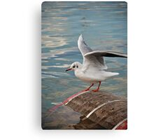 I believe i can fly Canvas Print