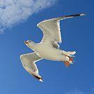 Wings of Dreams.... by Hans Bax