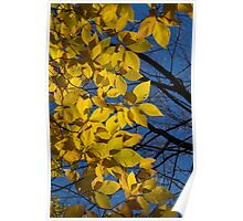 Sapphire and Gold - Blue Sky, Golden Leaves & Bright Sunlight Poster