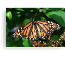 Awesome Monarch Canvas Print