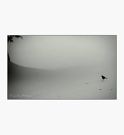Little Snow Bird Photographic Print