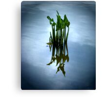 The Reflection's Call Canvas Print