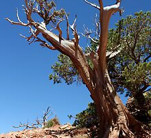 Gnarly Survivor by RFA-Photography