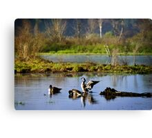 Canada Geese Sunrise Landscape Canvas Print