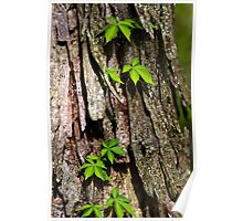 Vine on Bark Abstract Poster