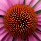 Echinacea centre by triciamary