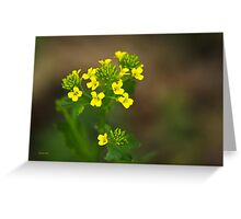Wintercress Wildflowers Greeting Card