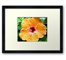 Orange Hybiscus Framed Print