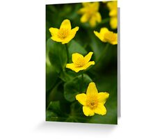 Marsh Marigold Flowers Greeting Card