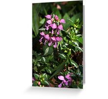 Pink Lamium Flowers Greeting Card